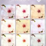 Blossom Actions – FAY0023
